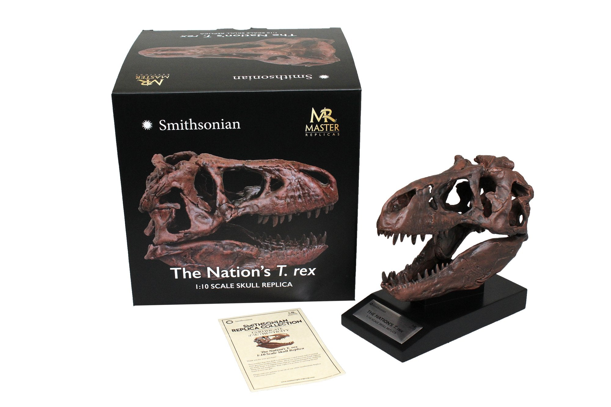 Great Review of our Smithsonian Nation's T. rex Skull Fossil Replicas
