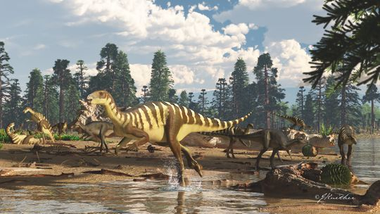 Wallaby-sized dinosaur was sprinting around Australia 125 million years ago