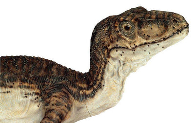 VELOCIRAPTOR / DEINONYCHOS 2 (Closed Jaw) - Life-size Collectible Statue