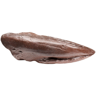 Allosaurus Dinosaur Claw Fossil Collectible and Replica