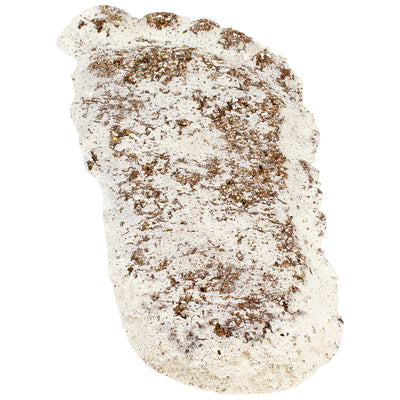 Bigfoot Track Casting Artifact Replicas and Collectibles
