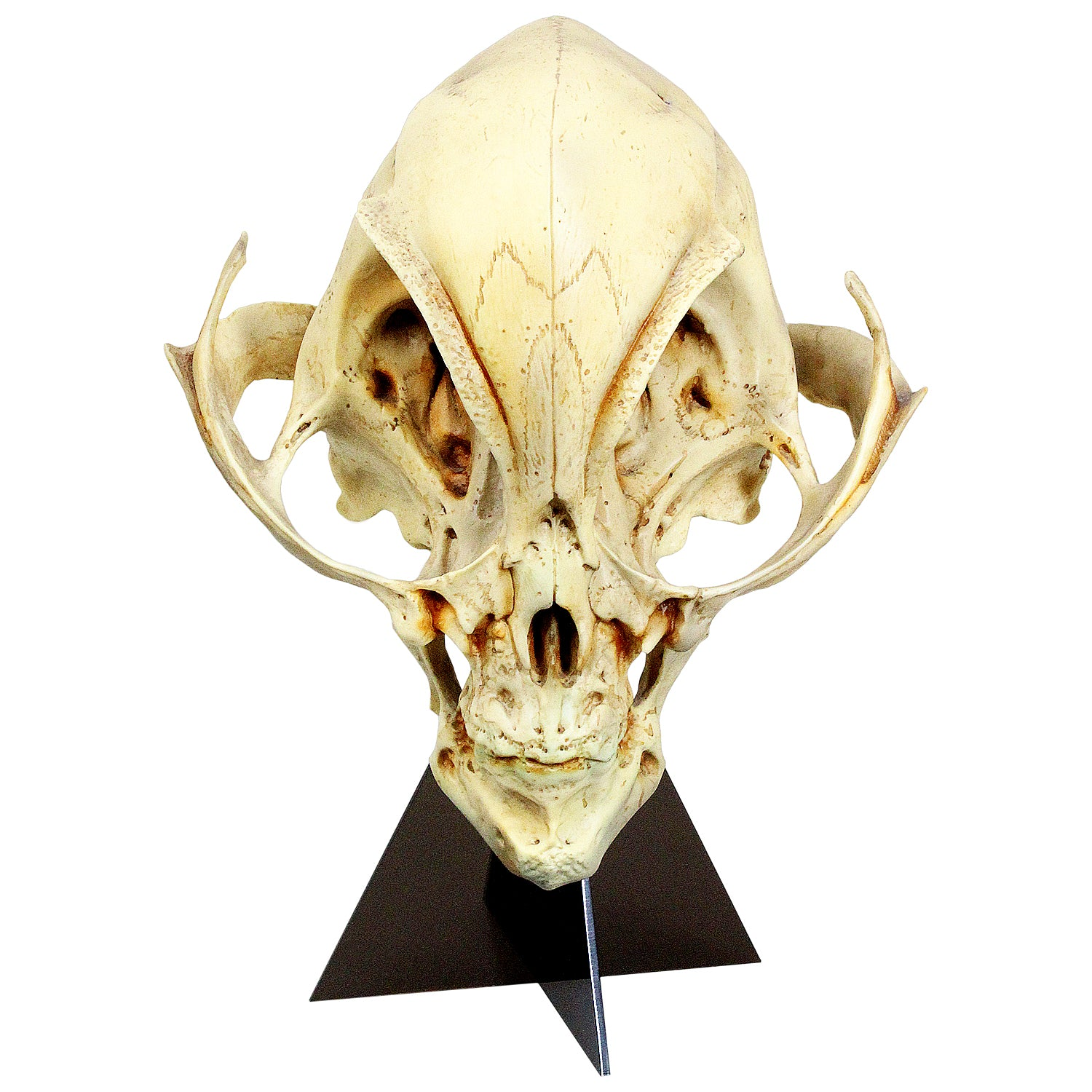 Alien Skull Sculpture