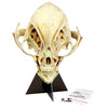 Area 51 Alien Skull Replicas and Collectibles