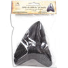 MR Megalodon Tooth Fossil Replica (Educational Version)