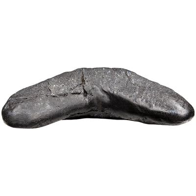 Megalodon Tooth Dinosaur Fossil Replica and Collectible Educational Home School Supplies