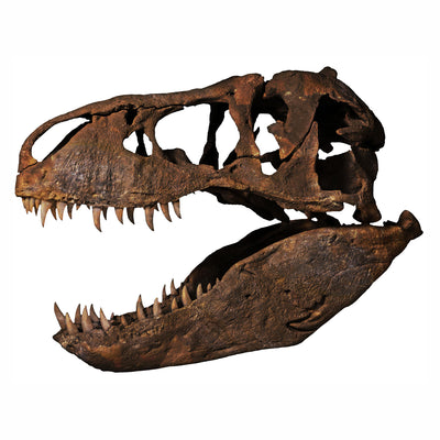 Smithsonian Nation's T. rex Full-Scale Fossil Skull Replica - Pre-Order