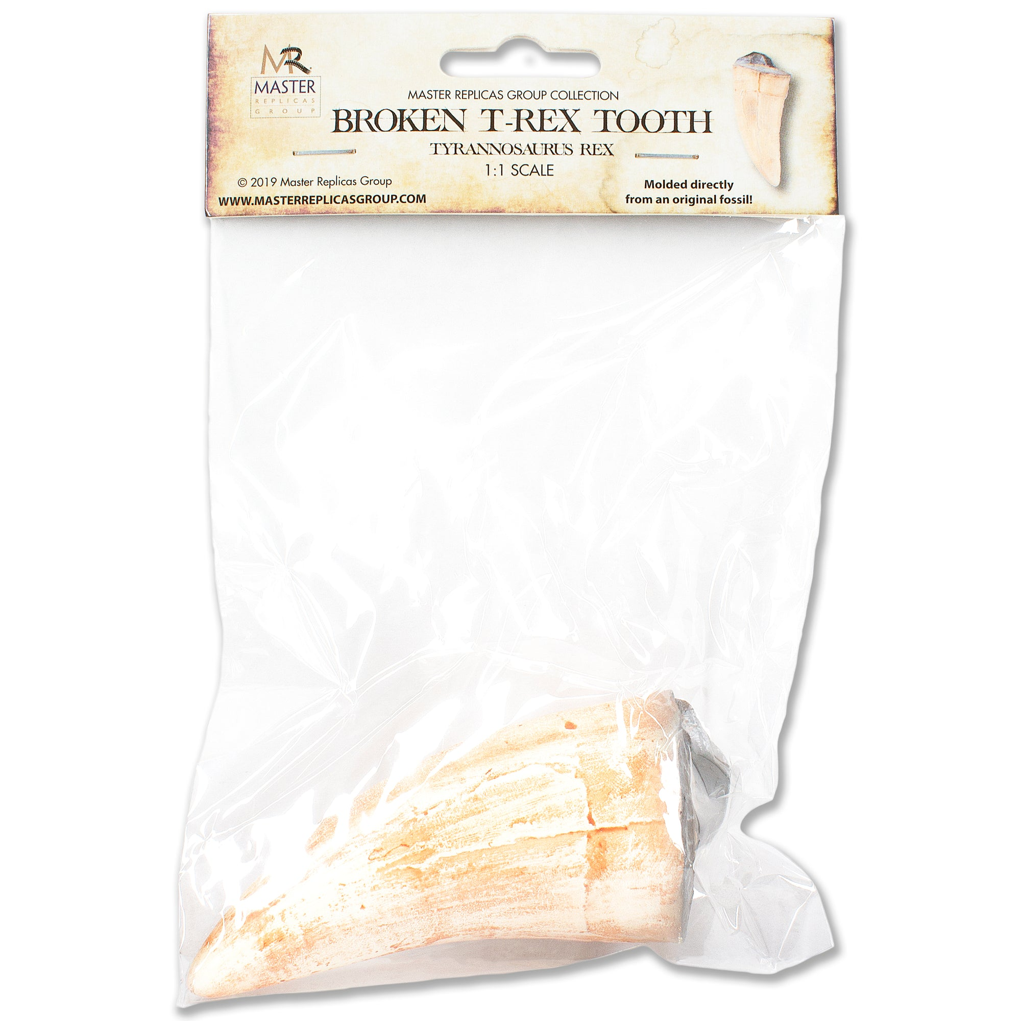 T-Rex Broken Tooth Replica Fossil Educational Version by Master Replicas Group