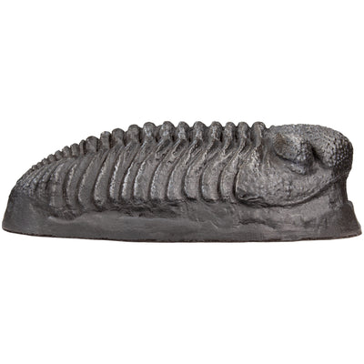 MR Trilobite Fossil Replica (Educational Version)