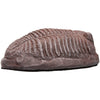 Trilobite Dinosaur Fossil Replica and Collectible