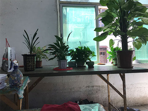 Asdam Art Studio Plants