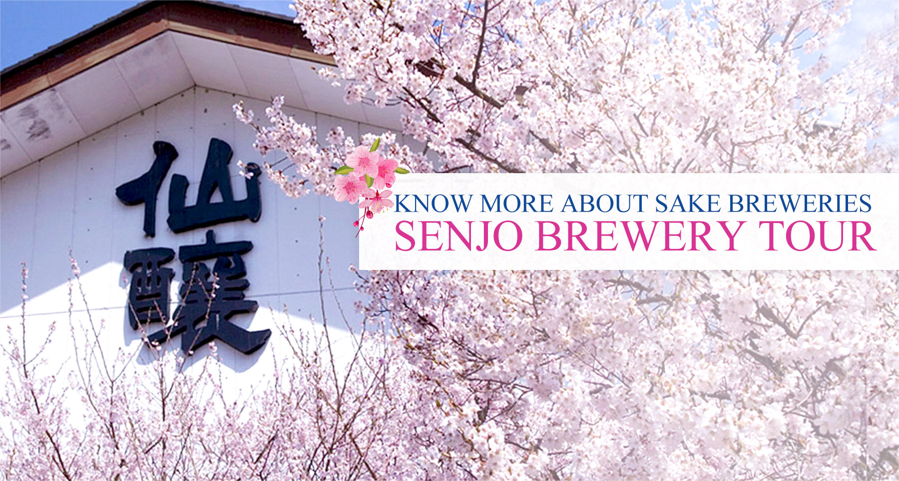 Saketora - Know more about sake breweries - Senjo Brewery Tour