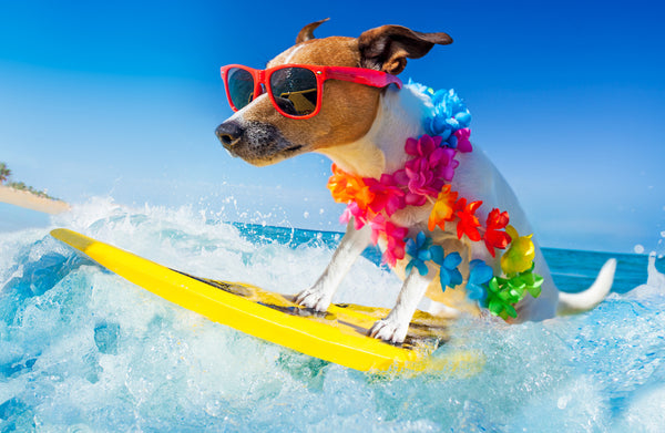Summer Must-Haves for Dogs
