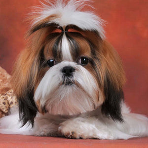Shih Tzu Diamond Cross Stitch Embroidery Painting Hobby Kit
