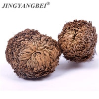 New Magic Resurrection Plant Rose of Jericho Dinosaur Plant Air Fern Selaginella Moss