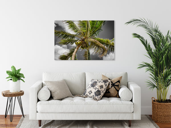 Coconut Palm 4