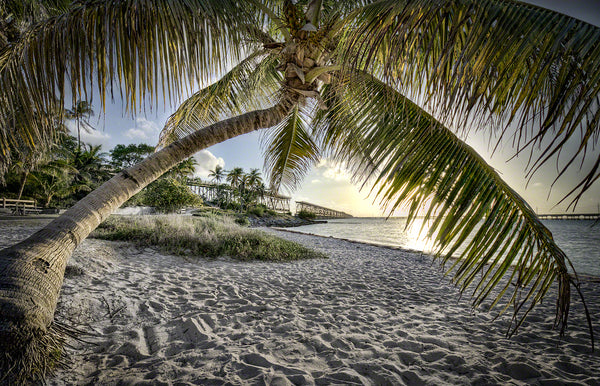 A photo of the Bahia Honda beach framed by a palm tree with an old railroad bridge in the background.
