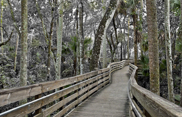 A landscape photograph by Mike Ring of a the boardwalk along Blue Springs run