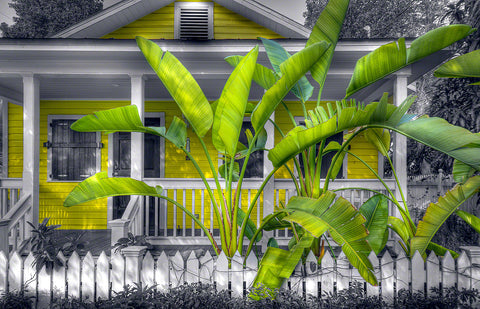 A photo of a tropical yellow house with a beautiful bird of paradise plant in front