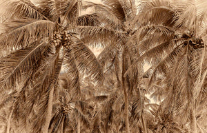 A sepia tone photo of a group of coconut trees in sepia tone in islamorada, Florida