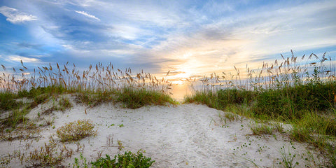 A beautiful sunrise over a beach dune with sea oats in New Smyrna Beach, Florida
