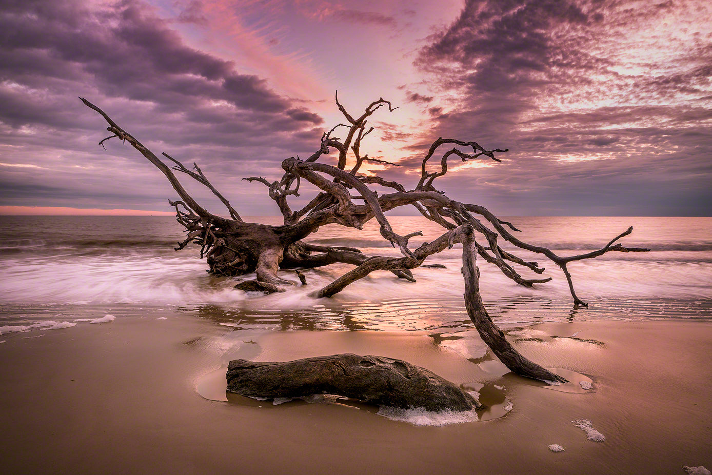 A photo of a large old oak tree driftwood on the beach in Jekyll Island, GA