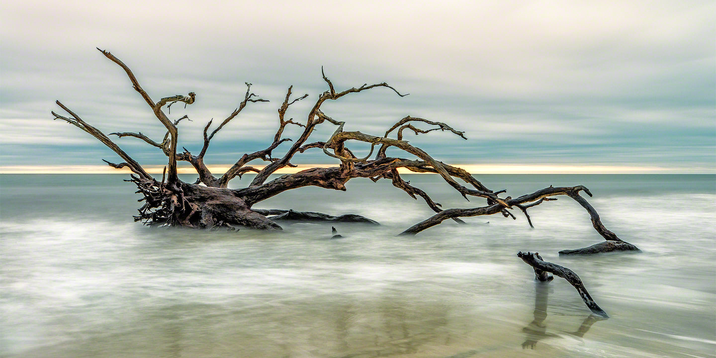 A Panoramic Photograph by Fine Art Photographer Mike Ring of beautiful driftwood