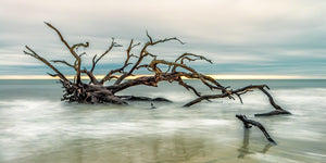 A photo of a large live oak tree driftwood on the beach in Jekyll Island, GA