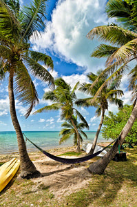A photo of a hammock between two coconut palm trees with the gulf of mexico