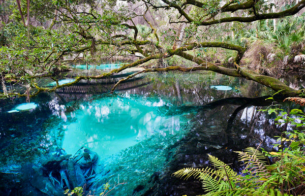 A Landscape Photograph by Fine Art Photographer Mike Ring of Juniper Springs in Ocala, Florida