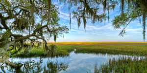A landscape photograph by Mike Ring the low country on Jekyll Island, Georgi