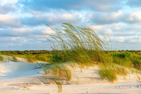 Sea Oats Sunrise 1