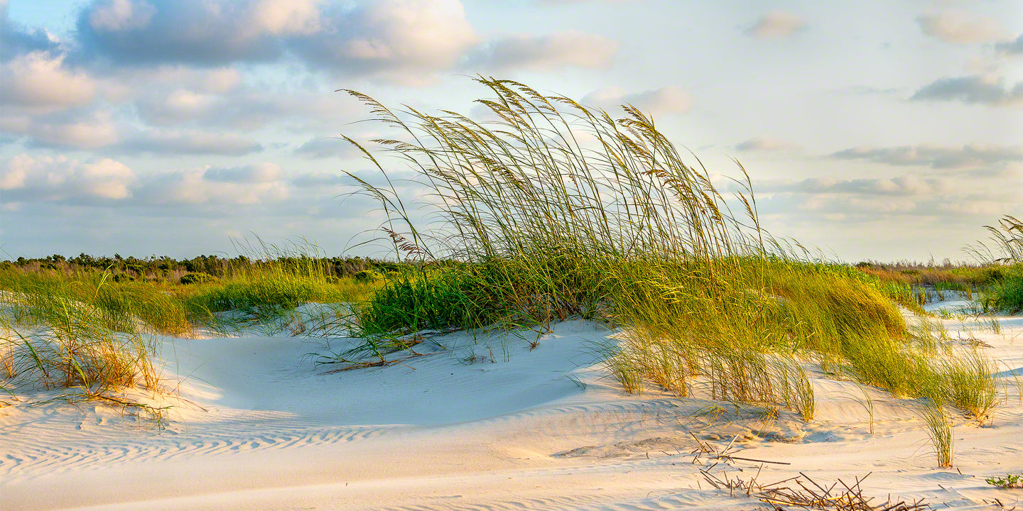 Sea Oats Sunrise 2