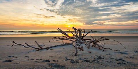 A photo of a large piece of driftwood at sunrise in New Smyrna Beach, Florida