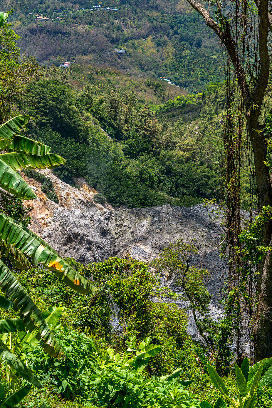 A photo of the lush tropical vegetation growing around the Volcano Soufreire in St. Lucia