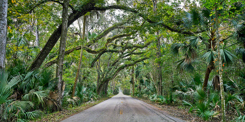 A photo of Walter Board man road cutting through a tropical hardwood hammock