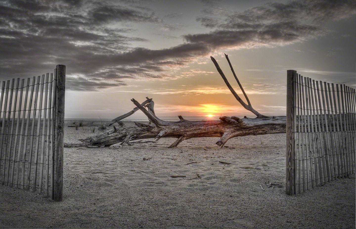 A photo of driftwood at sunrise on Tybee Island, Georgia