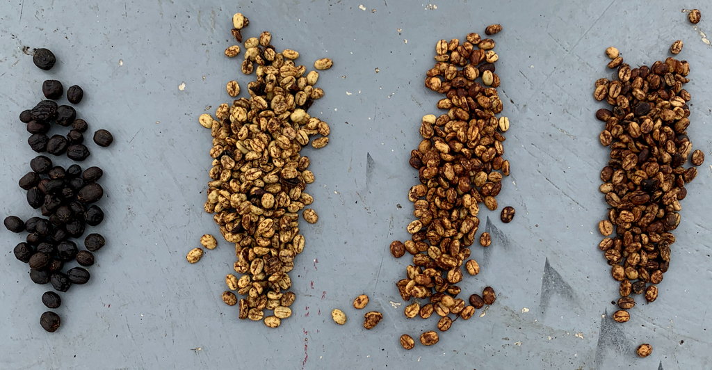 Honey Processed Coffees from Costa Rica and Guatemala