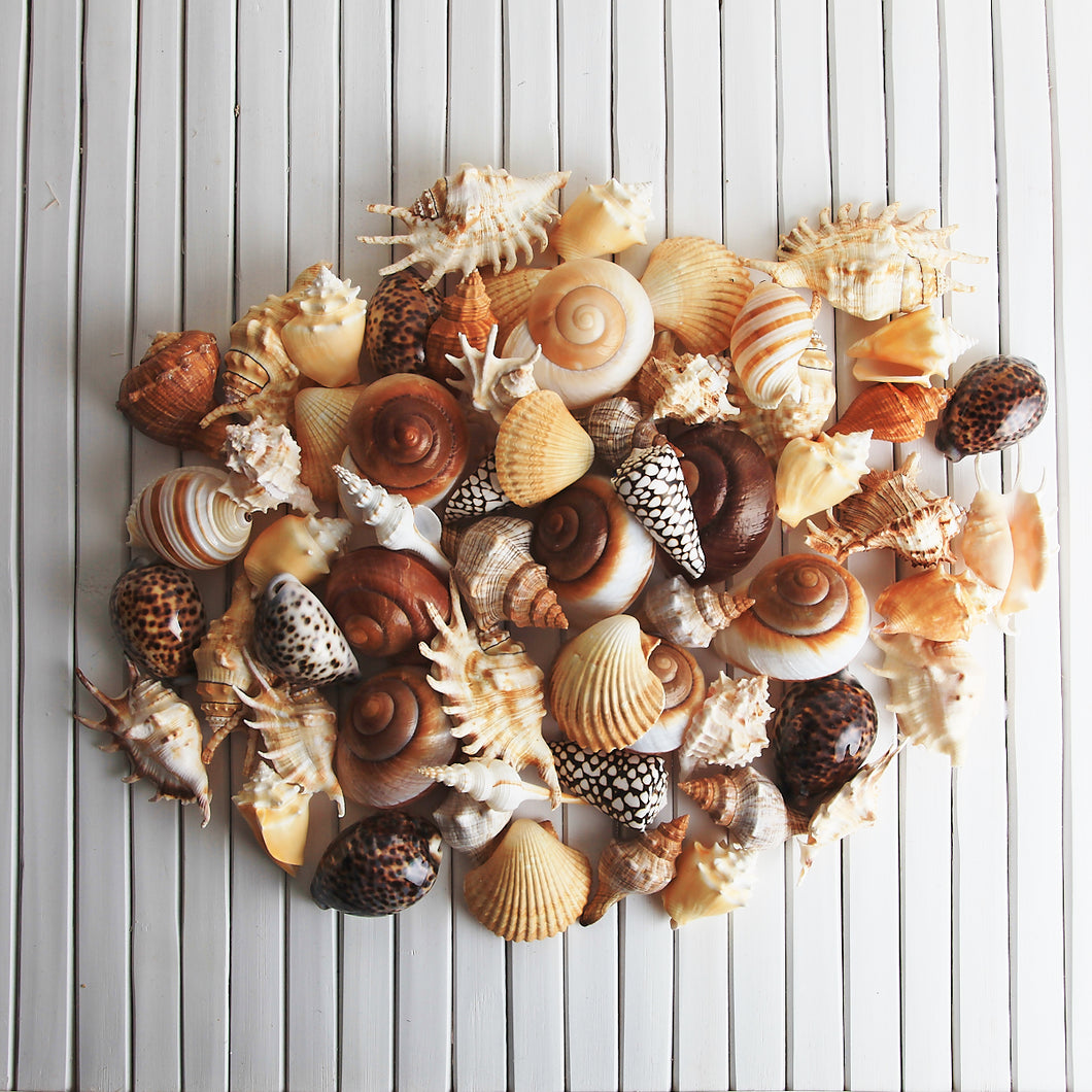 Shell treasure collection - Earthy, neutral tones