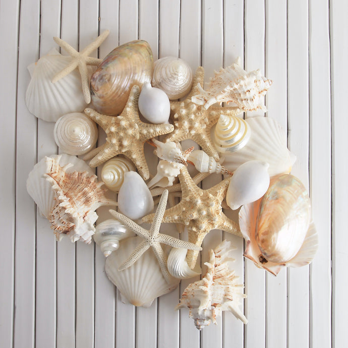 Shell treasure collection - White on white