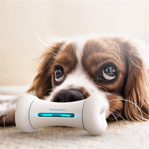 1 Smart Interactive Pet Toy For Bored Dogs