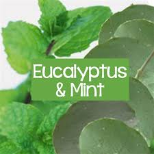 Eucalyptus & Spearmint 16oz