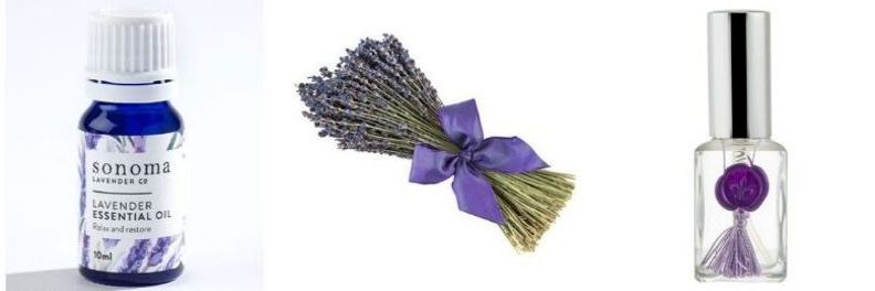 sonoma lavender essential oil dried bouquet o french lavender and essential oil spray