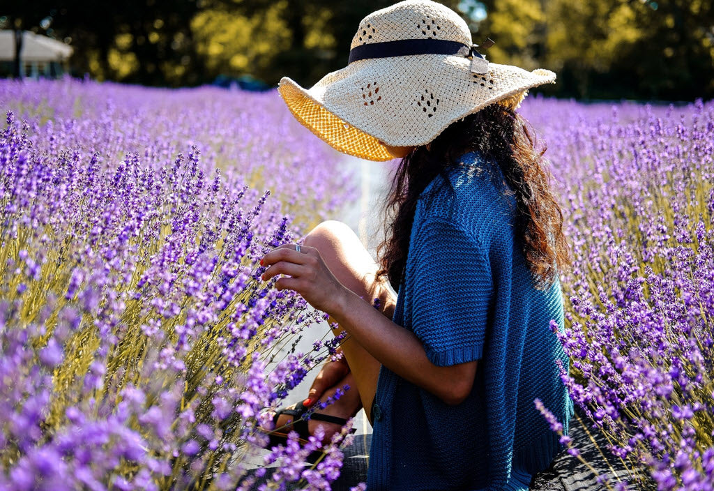 woman picking lavender in sonoma lavender field