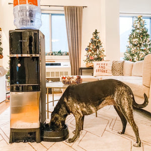 Deluxe Top Loading Water Dispenser with Pet Station