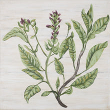 "Load image into Gallery viewer, ""Sage Botanical"""