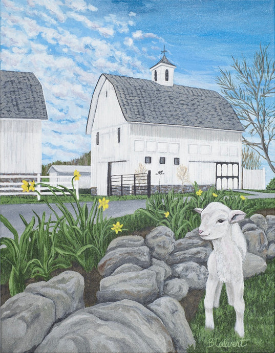 Lamb in front of White Barn, Home Decor, Flat Print / Free U.S. Shipping!*
