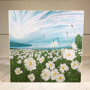 Daisy Field, Shelf Sitter/ Free U.S. Shipping!*