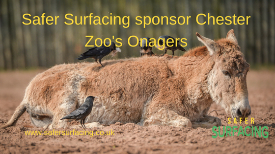 Safer Surfacing sponsors Chester Zoo