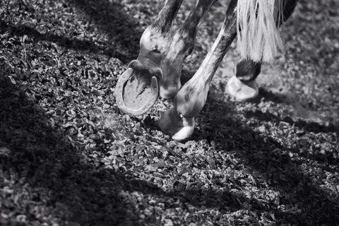 horse hooves on equestrian surface