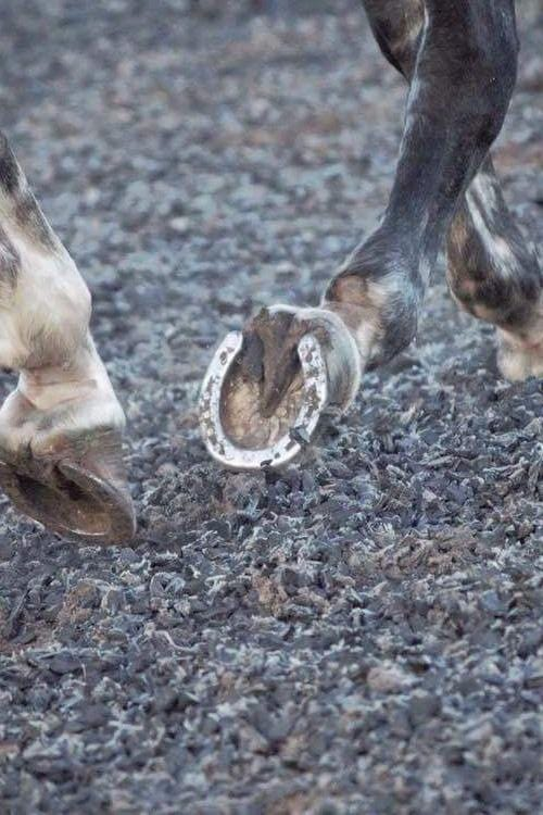 Equestrian Rubber Tyre Chippings